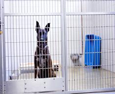 dog-cat-kennel-1-jpg-1-.jpg